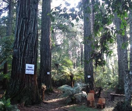 atrações em canela parque das sequoias